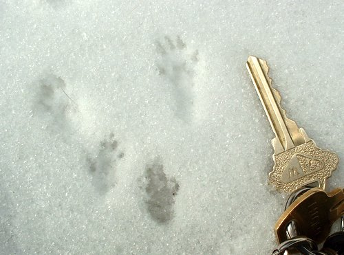 Small mammal tracks with keys for scale
