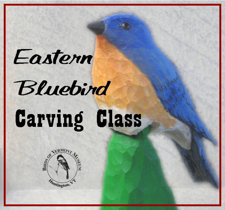 Eastern Bluebird Woodcarving Class, taught by David Tuttle at the Birds of Vermont Museum