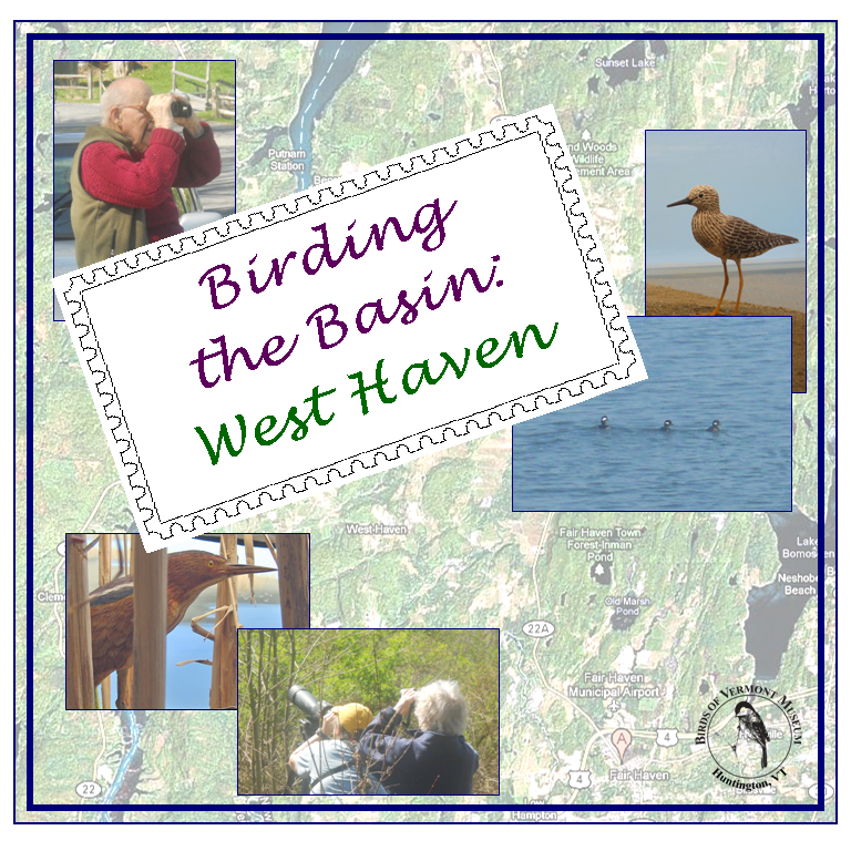 Birding the Basin: West Haven Field Trip -- Join us for a great field trip in the southern portion of the Lake Champlain Basin!