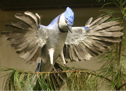 Blue Jay carved by Robert N. Spear, Jr.