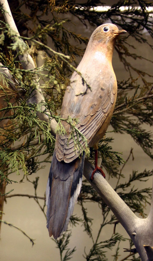 Mourning Dove, carved and painted by Bob Spear, completed in 1982