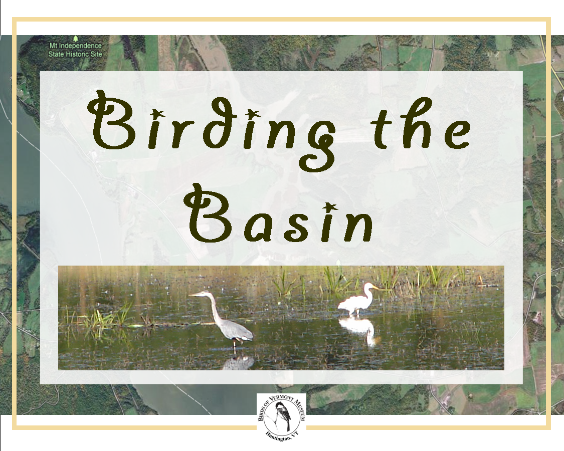 Birding the Basin (Fall Field Trip: Orwell, Vermont)