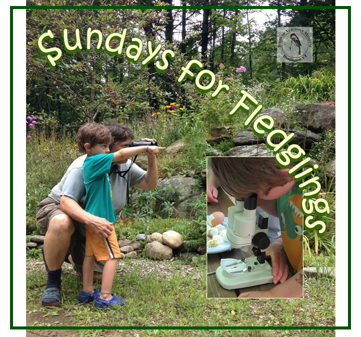 Sundays for Fledglings: Kids + Birds = Fun!
