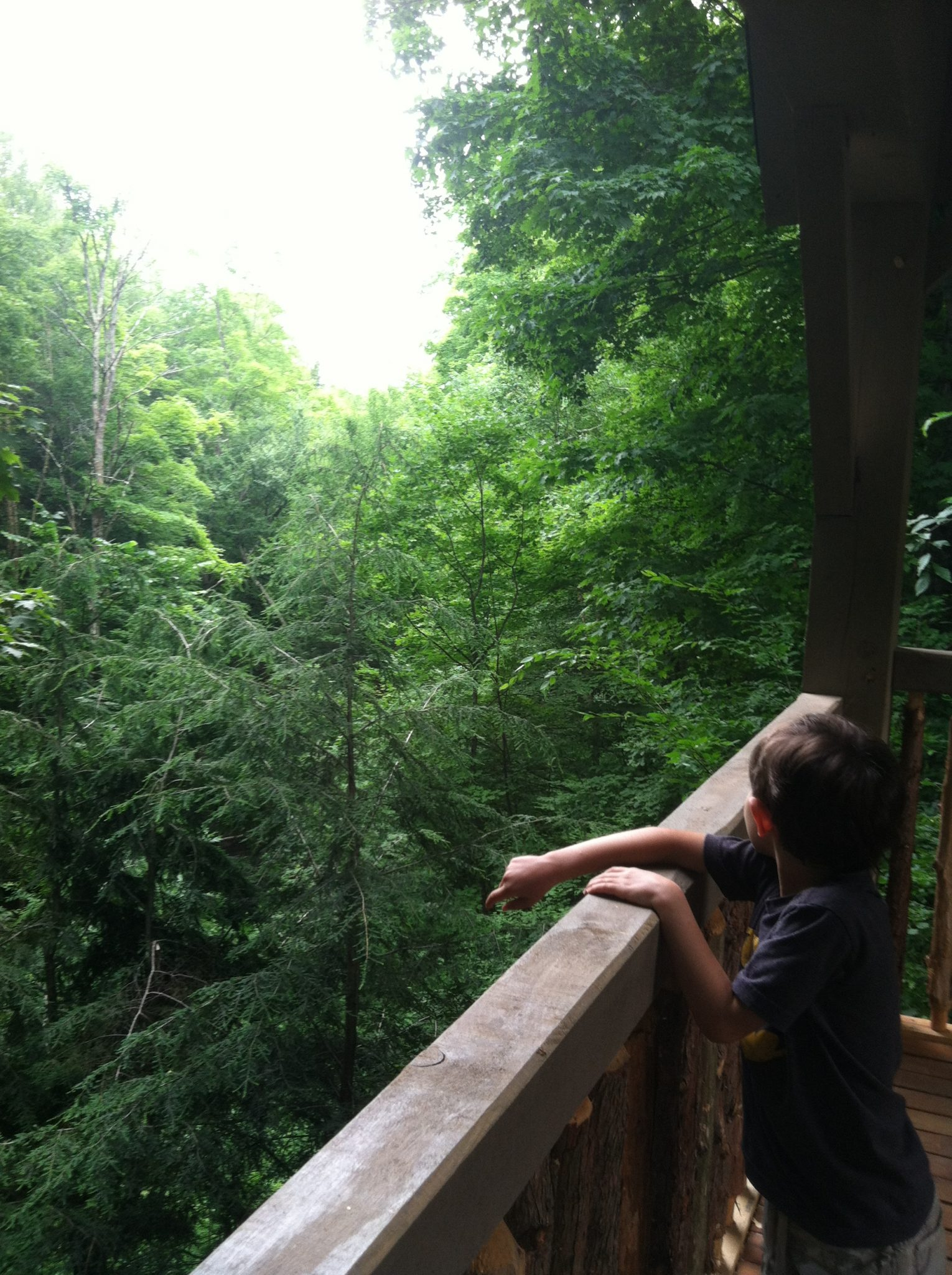 View from the Birds of Vermont  Museum's Treehouse