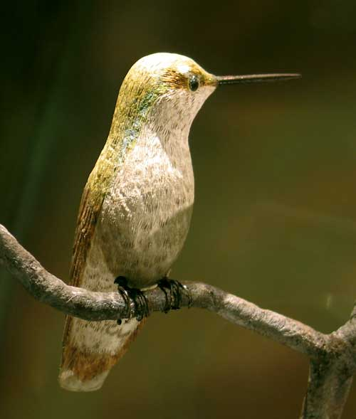 Ruby-Throated Hummingbird Female (woodcarving)