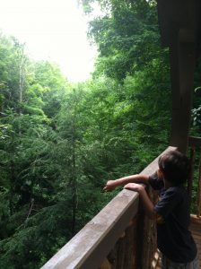 child gazes into forest over railing of our walk-in treehouse
