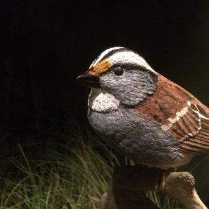 White-throated Sparrow, carved by Bob Spear.