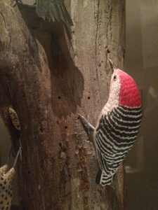 Red-bellied woodpecker, carved by Bob Spear