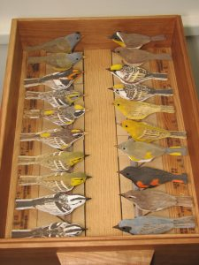 teaching warblers