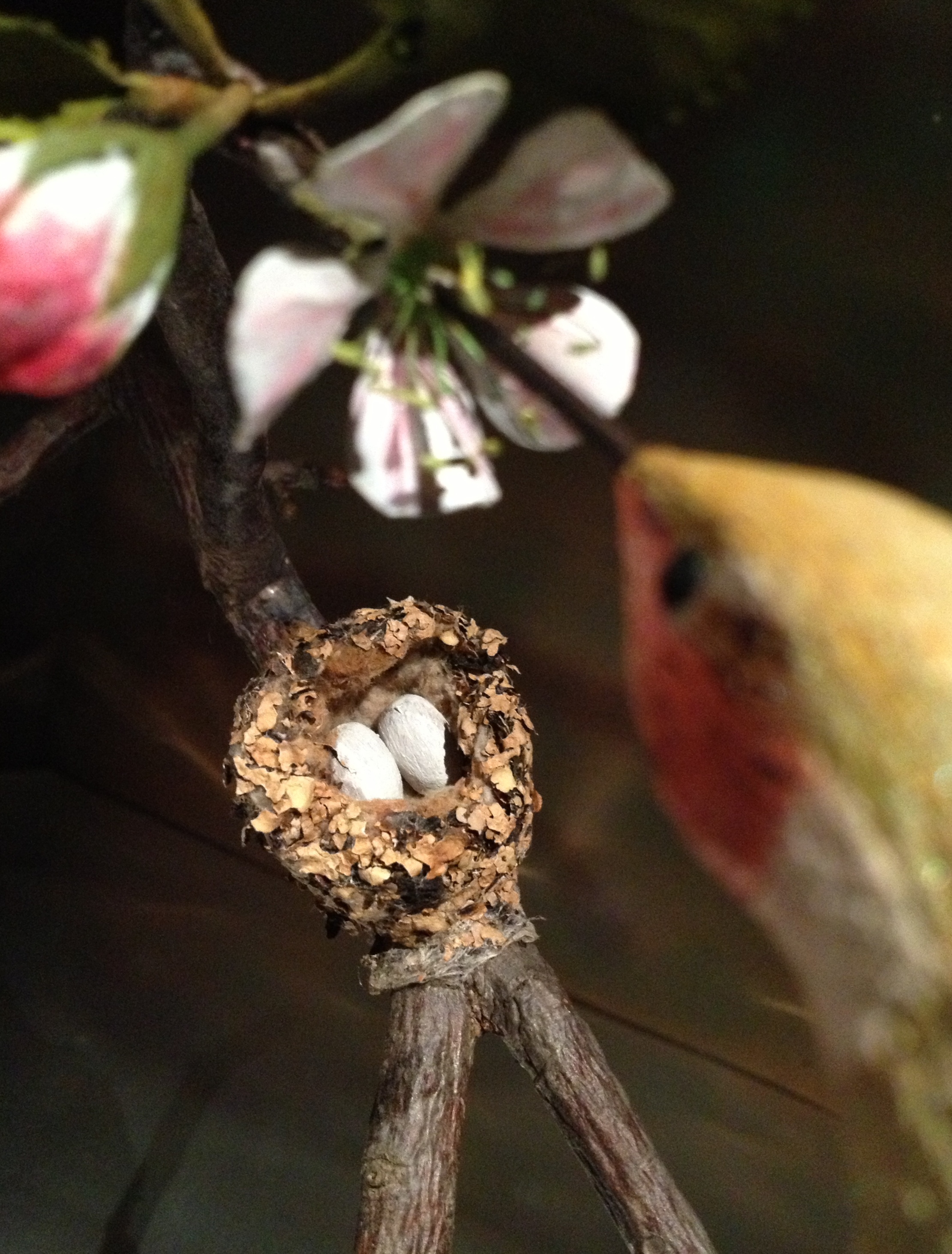 Hummingbird and eggs carved by Bob Spear, and real nest.