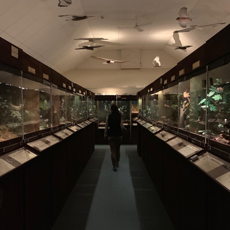 The nesting gallery inside the Museum