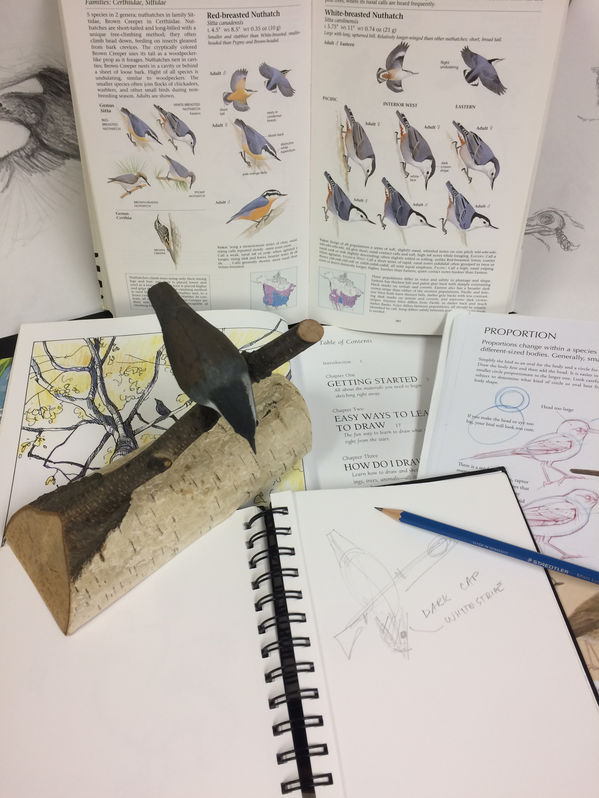 nature journaling and sketching materials
