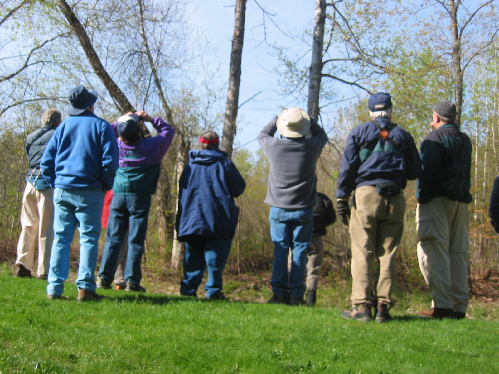 Birders in early spring, looking at trees that are not fully leafed out.