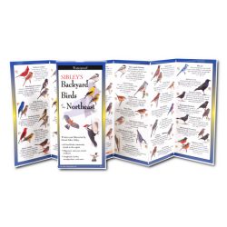 Folding Guide: Sibley's Backyard Birds of the Northeast