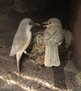 Eastern Phoebe pair at nest, woodcarving by Bob Spear