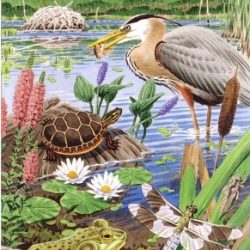 cover of PondWatchers folding guide from Mass Audubonshowing a pond-edge scene with birds, turtle, frog, plants, insects